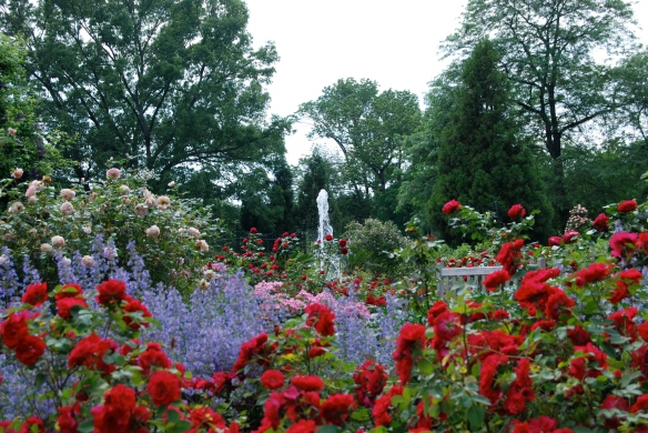 Morris Arboretium